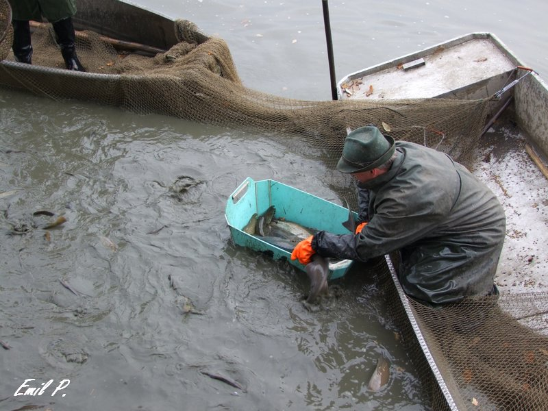 Výlov rybníku Velká Dálka 2016